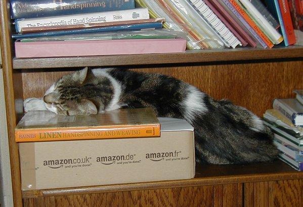 Tigs on bookcase.jpg