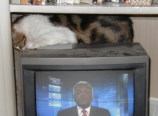 Tigs onTV 2.jpg