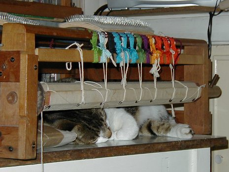 loom cat 2.jpg