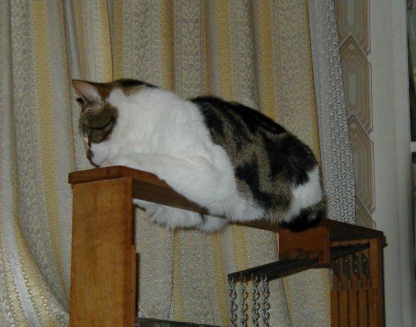 loom cat.jpg
